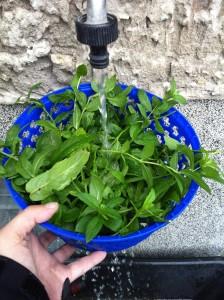 frische Minze waschen und danach noch einmal in der Salatschleuder trocknen